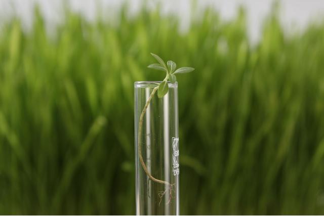 土壌分析で農地のさらなる改善を